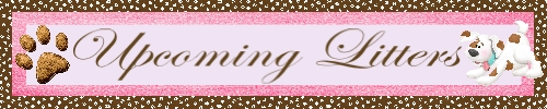 Upcoming Litters Banner-001